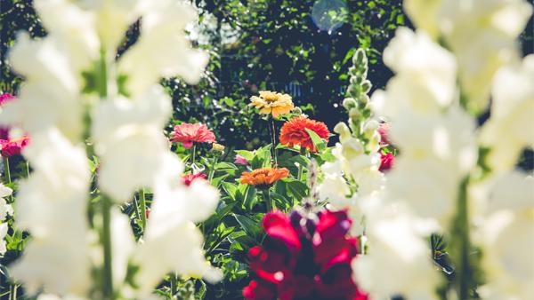 Irrigazione domotica la cura delle piante a portata di for Irrigazione piante